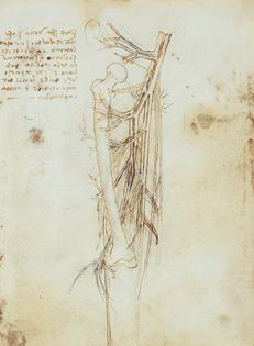varicose vein diagram from leonardo davinci